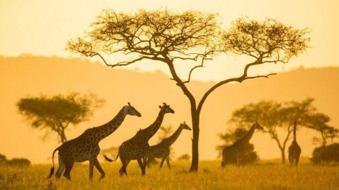Economía africana